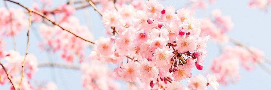 Primavera, che ansia!