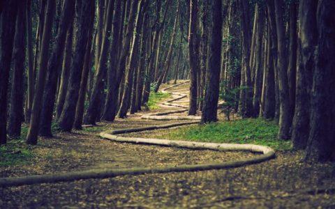 Perché un percorso in caso di intervento bariatrico